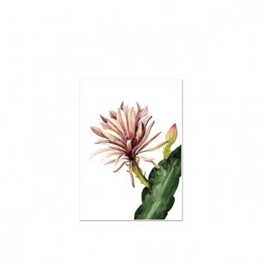 red-cactus-kunstdruck-leo-la-douce-a4.jpg