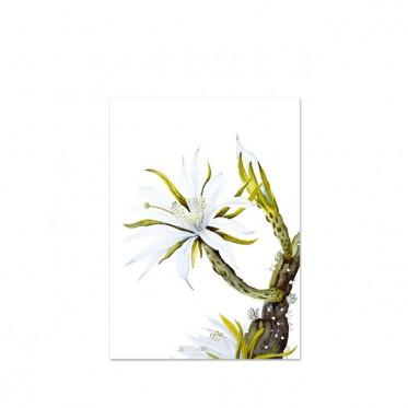 white-cactus-flower-kunstdruck-leo-la-douce-a3.jpg