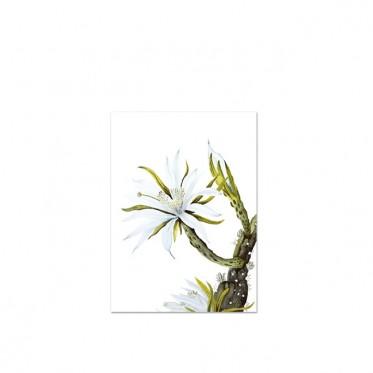 white-cactus-flower-kunstdruck-leo-la-douce-a4.jpg